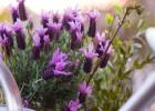 kwiatki-na-balkonie